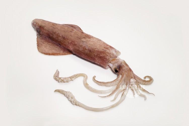 Calamari interi